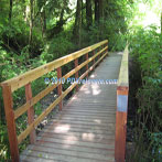 Northwest Portland audubon Society Trail